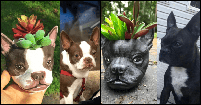 You Can Get A Custom Succulent Planter That Looks Just Like Your Dog Or Cat
