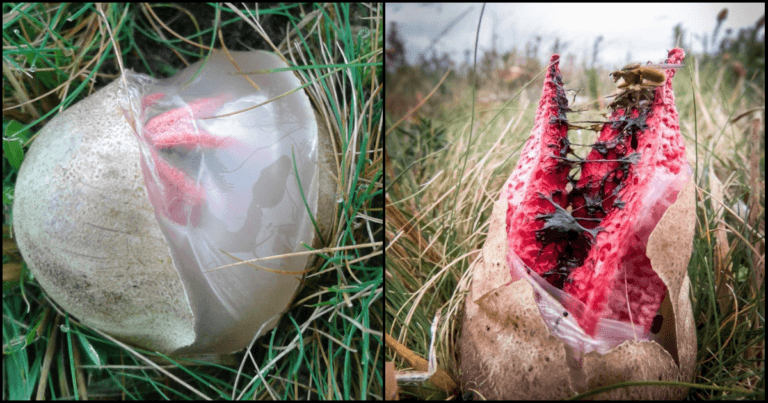 These 'Alien' Mushrooms Are A Horrifying Fungus From Britain