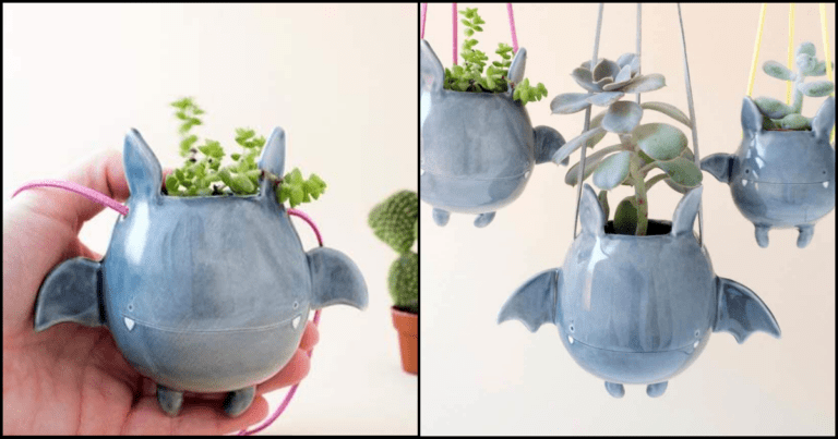These Flying Bat Succulent Holders Adds Charm To Your Halloween Decor
