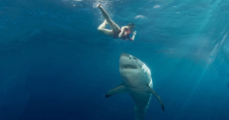 Biologist Explains Reason Behind Five Shark Attacks In Five Weeks