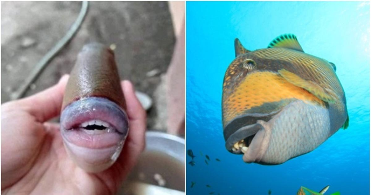 Triggerfish Creepy Fish