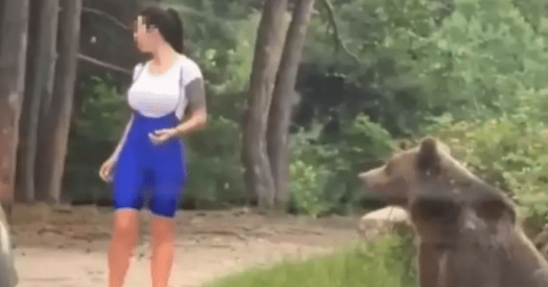 A woman was almost attacked by a bear after trying to get a selfie