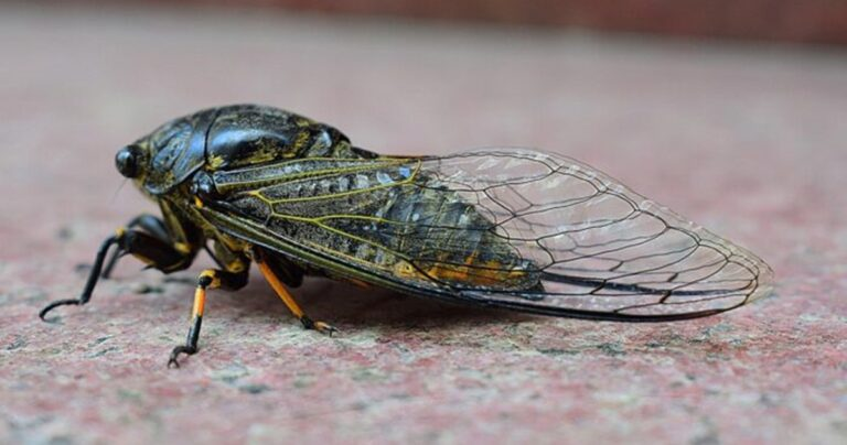 Zombie Cicadas Are Now A Thing. Because 2020 Isn't Bad Enough!